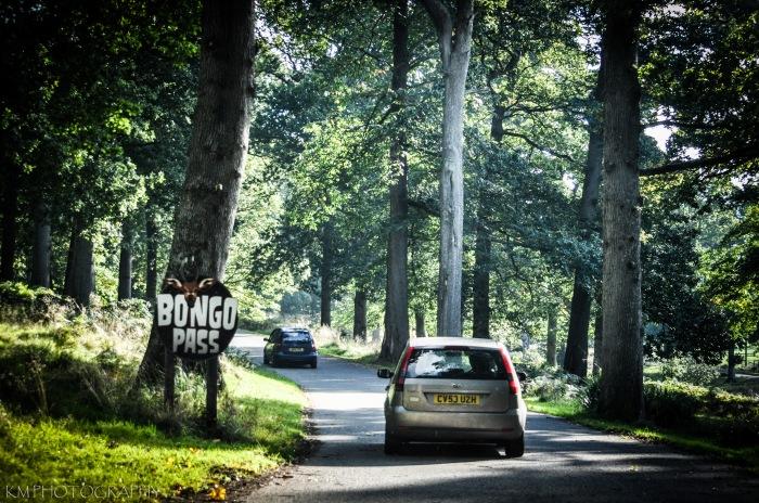 Bongo Pass