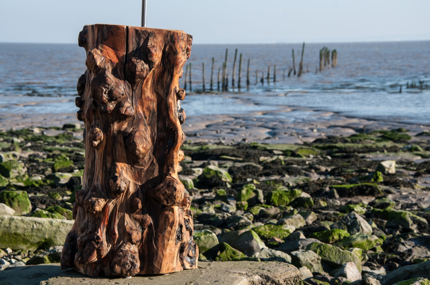 welsh-driftwood-19